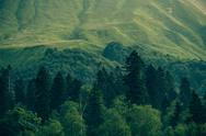 Stock Photo of coniferous deep forest in mountains caucasus beautiful landscape