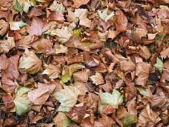Bed of dead leaves. Stock Photos