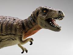 Tyrannosaurus close-up Stock Photos