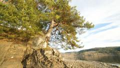 Old Tree and Rocks 4K timelapse Stock Footage