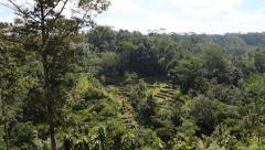 A tilt shot of an ubud rice terrace Stock Footage