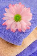 Towels and daisy Stock Photos