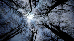 Full moon raising. trees silhouette. night sky. time lapse Stock Footage