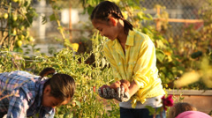 Three young girls pulling potatoes out of an urban garden Stock Footage