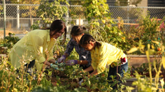 A woman and two young girls pulling potatoes out of an urban garden Stock Footage
