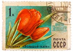 Post stamp printed in ussr (cccp, soviet union) shows image of tulip flower a Stock Photos