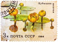 Stock Photo of post stamp printed in ussr (cccp, soviet union) shows image of water lilies