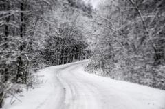 winter road in a forest - stock photo