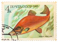 Post stamp printed in ussr (cccp, soviet union) shows oncorhynchus nerka (soc Stock Photos