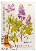 post stamp printed in ussr (cccp, soviet union) shows plant of delphinium dic - stock photo