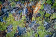 Stock Photo of multicolored lichen background