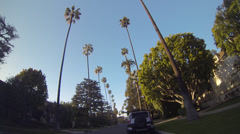 Driving through palm tree lined avenue, Beverly Hills, California, USA Stock Footage
