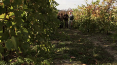 Two couples walking through vineyard drinking wine Stock Footage