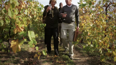 Two couples walking through vineyard drinking wine - stock footage