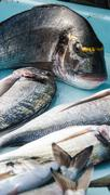 Fresh seafish on the fish market in marseille, Stock Photos