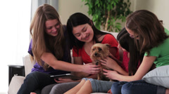 Four girls on sofa petting dog Stock Footage