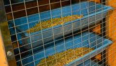 Corn grain in blue container device under processing, industrial equipment. Stock Footage