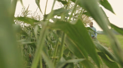 Black male farmer checking condition of corn crop Stock Footage