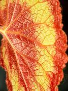 leaf background. - stock photo