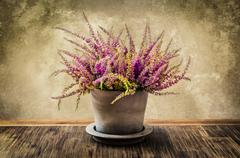 post-process painting of nice heather flower in pot - stock photo