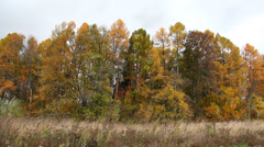 autumn forest - stock footage