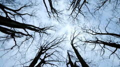 Silhouette of trees. woods forest background. light and darkness Stock Footage