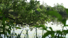 The view of the river through the leaves of plants. Stock Footage
