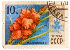 Stamp printed in ussr (cccp, soviet union) shows image of gladiolus moscovite Stock Photos