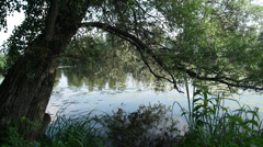 The reflection of trees on the surface of the river. Zoom lens Stock Footage