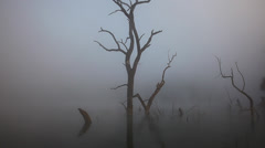 Stock Video Footage of dead tree in the lake