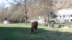 Spring day in the Belgian countryside. Stock Footage