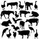 Stock Illustration of black set silhouettes  zoo animals collection on white background. vector ill
