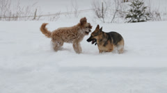 Two dogs playing in the snow Stock Footage