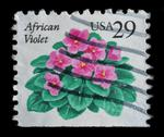 Stock Photo of usa -  circa 1993 : postage stamp printed in the usa, shows flower african vi