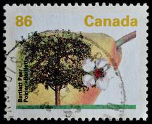 Canada -  circa 1992 : a stamp printed in the canada shows bartlett pear,  ci Stock Photos