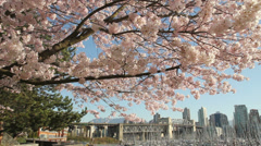 Dolly Shot Vancouver Cityscape Blossoms Stock Footage