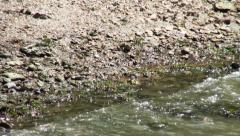 Frog crawling over the rocks to the water Stock Footage