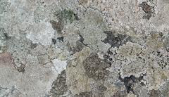 abstract lichen detail - stock photo