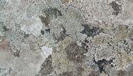 Stock Photo of abstract lichen detail