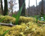 Stock Photo of forest floor detail