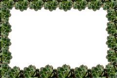 Stock Illustration of succulent plant frame