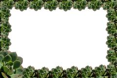 Succulent plant frame Stock Illustration