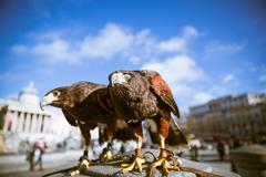 majestic eagles in london - stock photo