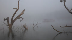 Dead tree in the lake with morning mist Stock Footage
