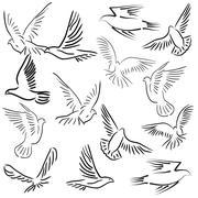 Stock Illustration of set of white vector doves.