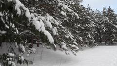 SNOWY WINTER SCENE Stock Footage