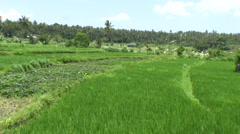 Rice field of Tirta Gangga Stock Footage
