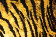 Stock Photo of Imitation of tiger leather as a background