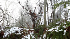 Forest Snow foggy 001 - stock footage