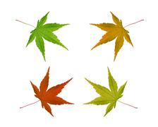 Colorful autumn leaves isolated on a white background Stock Photos